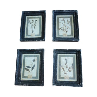 Authentic Italian Framed Herbariums - Set of 4