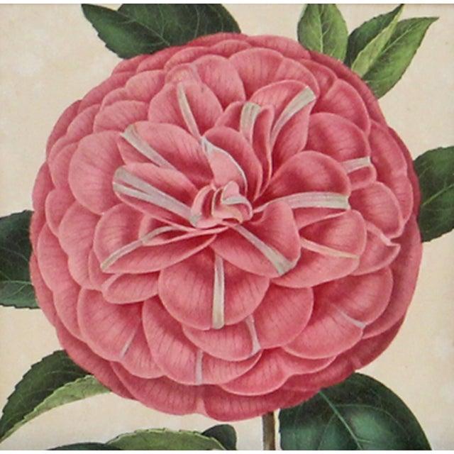 Verschaffelt 1854 Humboldt Camellia Print - Image 2 of 2
