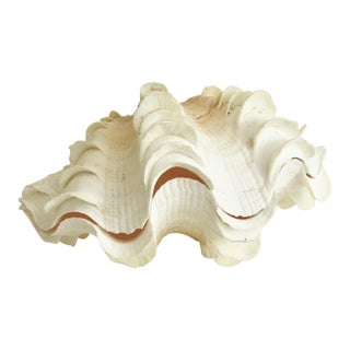 Ruffled Clam Shell