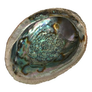 Large Abalone Shell Bowl