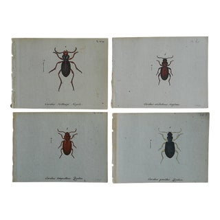 Antique Insect Engravings C.1760 - Set of 4