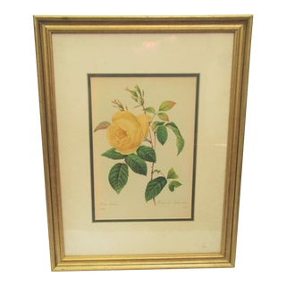 Vintage Yellow Rose Print