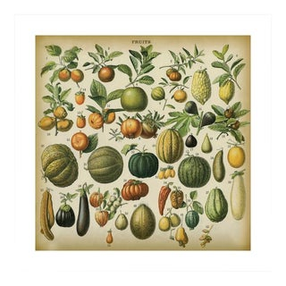 Antique 'Fruits' Archival Print