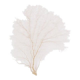 Large Authentic Pair of Sea Fans