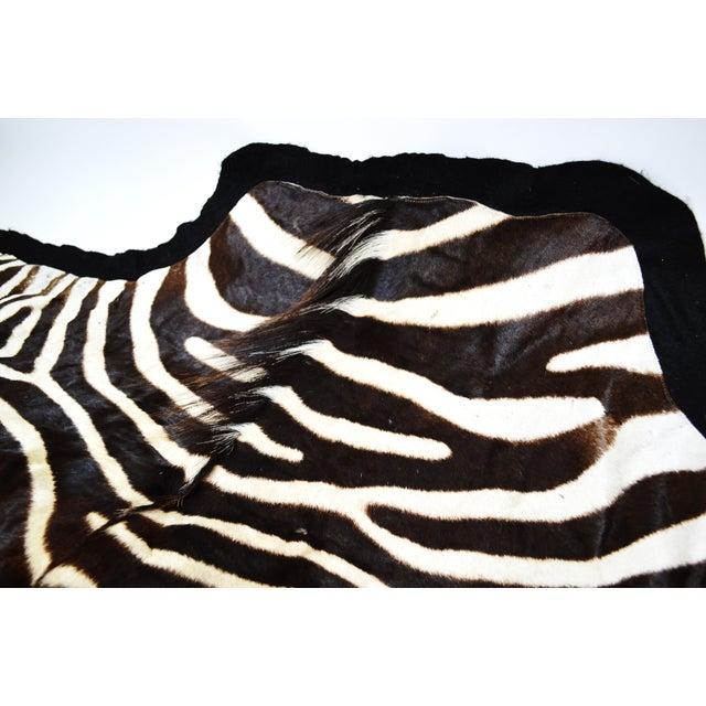 "Vintage Authentic Zebra Hide Fur Rug - 5'9"" X 6'1"""
