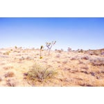 Image of Desert Plains Photograph