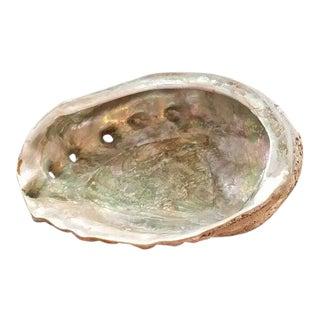 Iridescent Abalone Shell