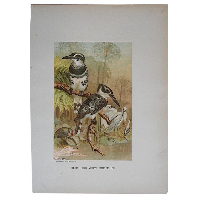 Antique Kingfisher Lithograph - Image 1 of 3