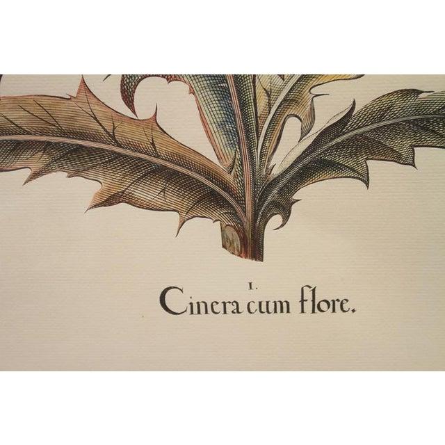 """Cinera Cum Flore"" Hand-Tinted Botanical Print - Image 3 of 8"