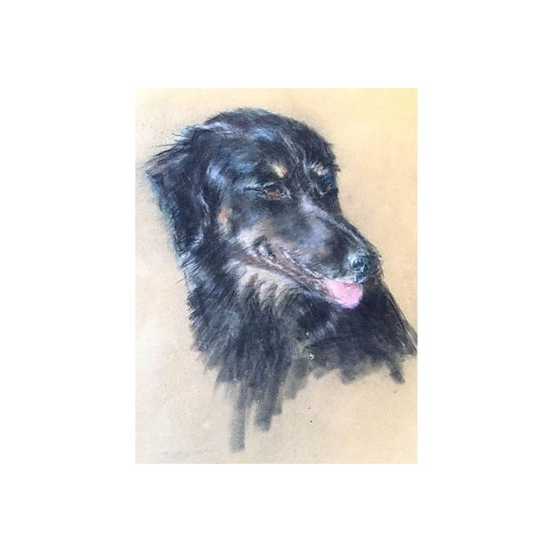 Mid Century Vintage Portait of a Dog in Pastel - Image 1 of 4