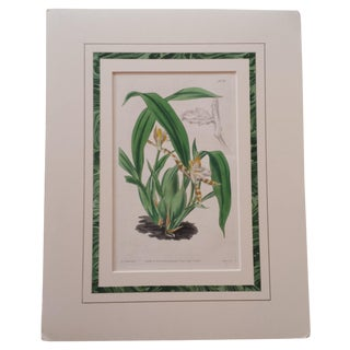 Botanical Orchid Print by Samuel Curtis