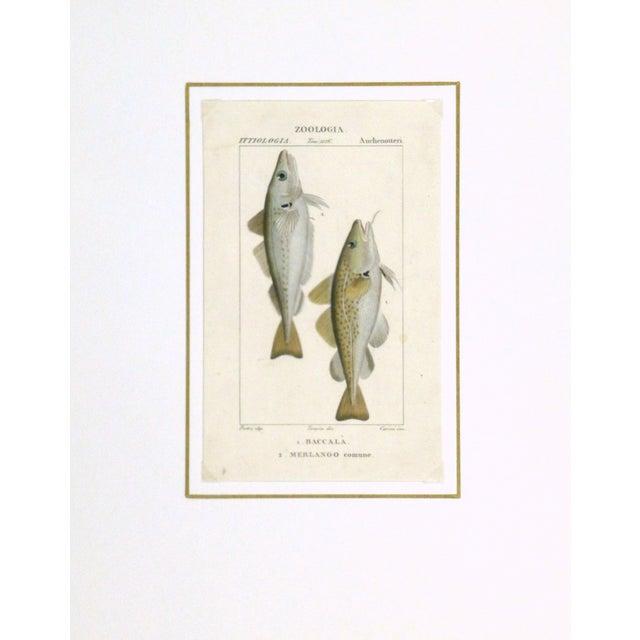 Image of Freshwater Fish Engraving Print, C. 1830