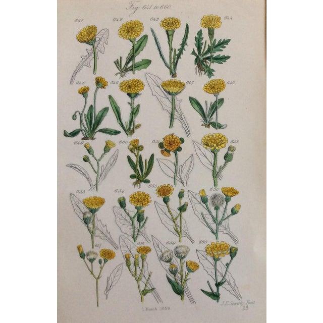 Botanical Prints C-1859 - A Pair - Image 4 of 9