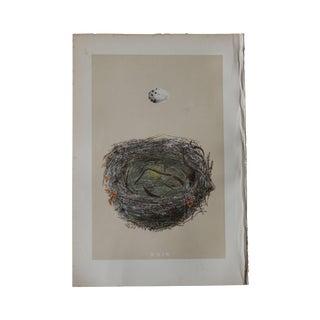 Birds Nest Print