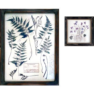 Creative Co-Op Pressed Botanical Wall Art - Pair
