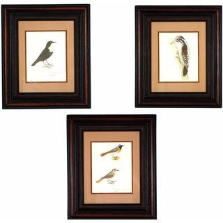 Vintage Framed Bird Prints - Set of 3