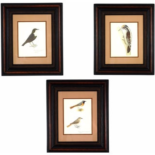 Vintage Framed Bird Prints - Set of 3