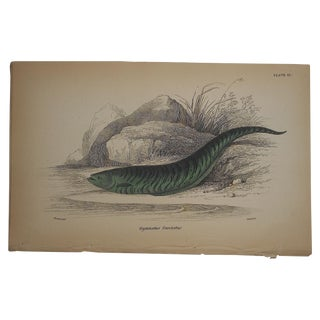 Antique Hand Colored Tropical Fish Engraving