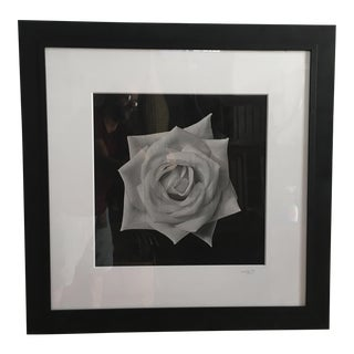 Vintage Black & White Rose Photograph