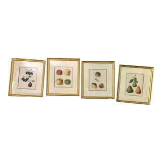 George Brookshaw Fruit Engravings - Set of 4