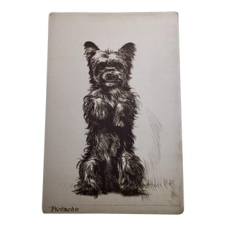 Pistache a Terrier by Diana Thorne, 1930s
