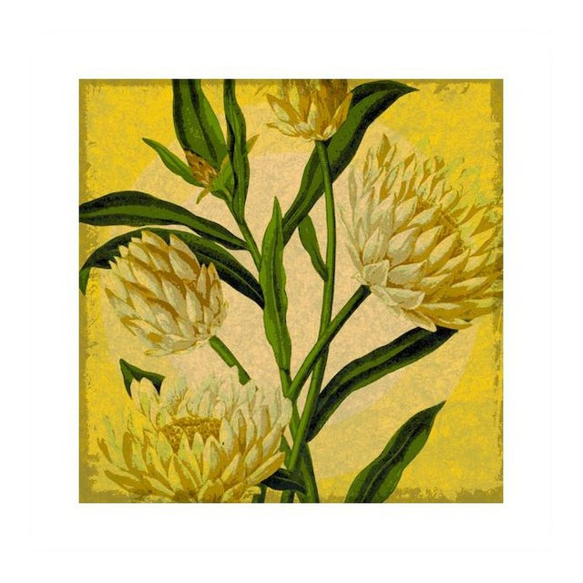 "Antique ""Yellow Floral"" Archival Print - Image 1 of 4"