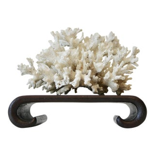 Natural Coral Specimen on Asian Style Curved Wood Stand