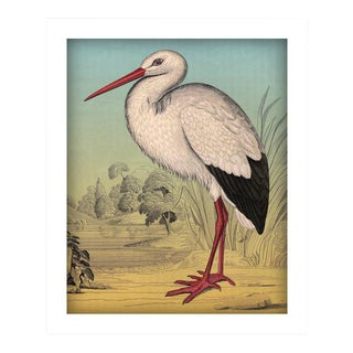 Antique 'Standing Stork' Archival Print