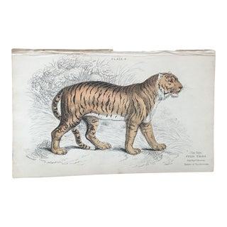 19th Century Jardine Tiger Engraving
