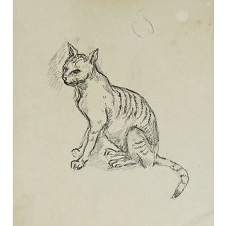 Alley Cat Pencil Study
