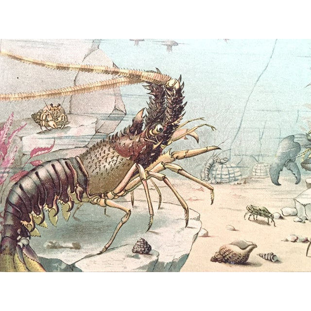 Image of Lobster Antique Lithograph C.1900