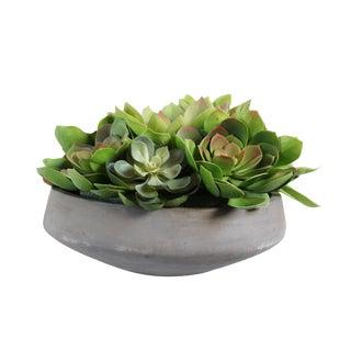 Cement Bowl & Echeveria Succulents