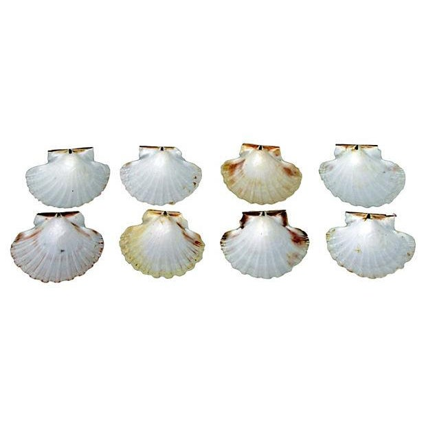 Natural Pink-Hued Shell Serving Dishes - Set of 8 - Image 3 of 3