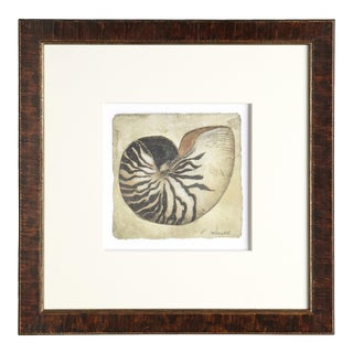 Artist - Michelle Woolley Sauter 'Vintage Tommy Bahama Shell No. 2'