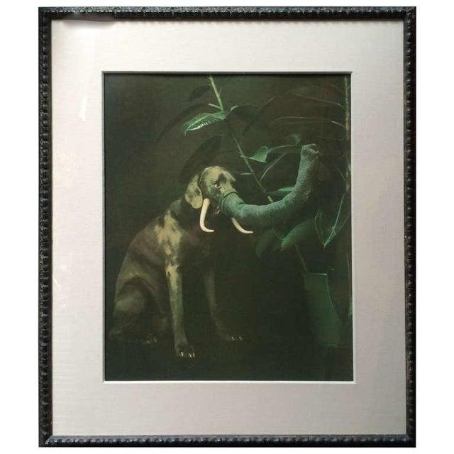 "Image of William Wegman ""Elephant Dog'' Original Print"