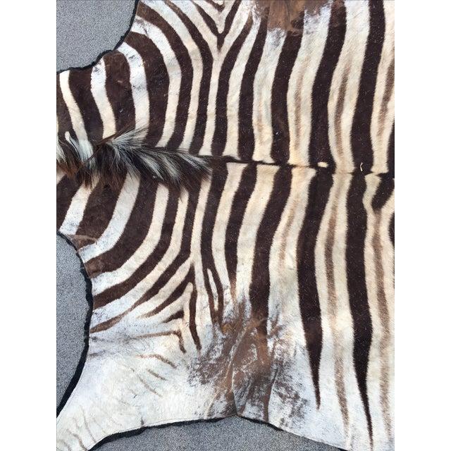 Vintage Zebra Hide Rug - Image 5 of 7