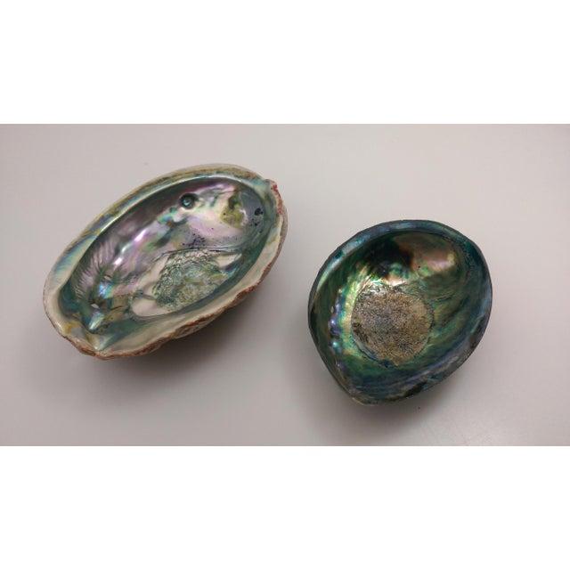 Small Abalone Sea Shells - Pair - Image 2 of 9