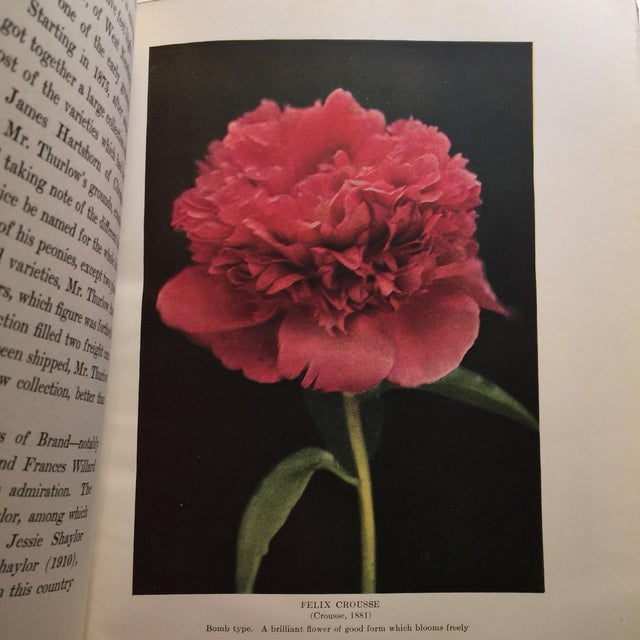 """The Book of the Peony"" by Harding, 1917 - Image 8 of 11"