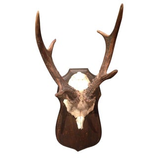 Mounted Mule Deer Antler Collection - Set of 28