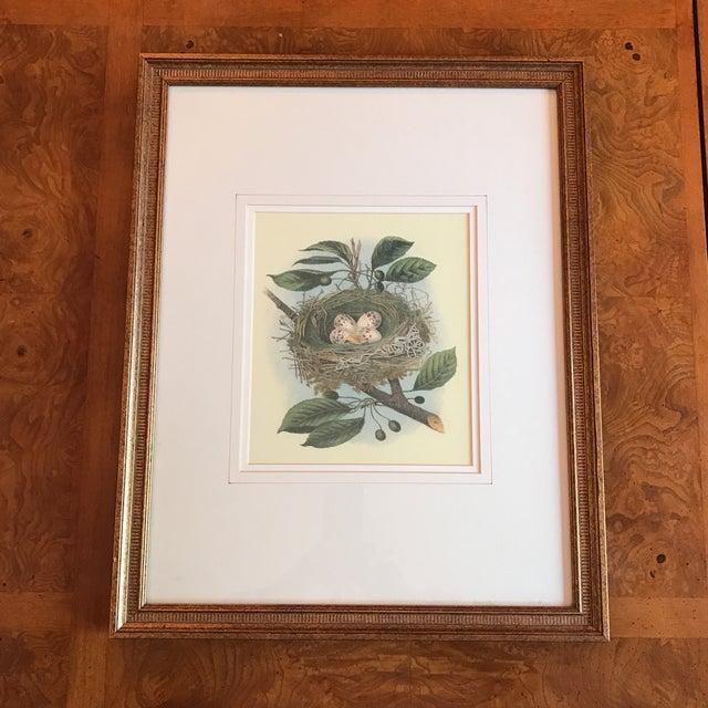 Vintage Bird Nest & Eggs Framed Print - Image 2 of 5
