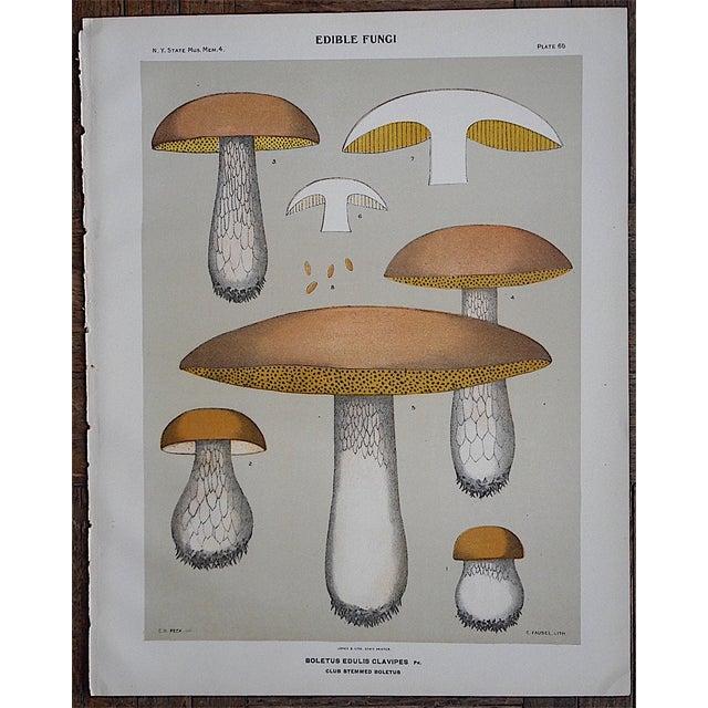Image of Antique Mushroom Chromolithograph