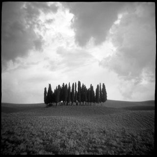 """""""Cypress Hill"""" Photograph by Daniel Grant"""