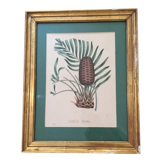 Antique Italian Fir Cone Etching