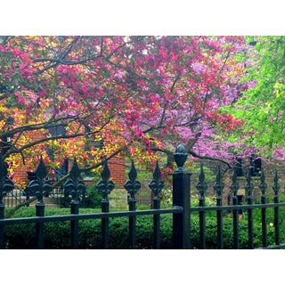 "Josh Moulton ""Spring in Lincoln Park"" Giclee Print"