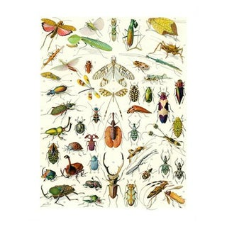 Vintage 'Bug City' Archival Print