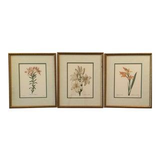 French Vintage Botanical Color Prints - Set of 3