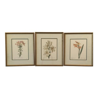French Vintage Botanical Color Prints - Set of 3