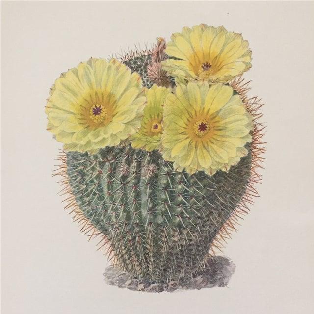 Vintage Succulent Cactus Print - Image 3 of 4