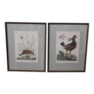 Antique Hand-Colored Botanical Engravings - A Pair