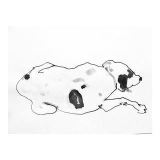 Sleeping Dog Drawing